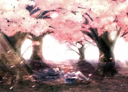 Water, Tree, Solo, Cherry Blossom